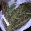 Лицеист из Ачинска задержан за хранение марихуаны