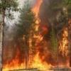 В крае действуют семь лесных пожаров