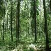 На защиту лесов в крае потратили более 25 миллионов рублей