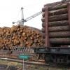 Из Хакасии незаконно вывезли лес на 17 миллионов рублей