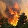 В крае сократилось количество лесных пожаров