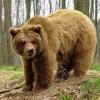 В Березовском районе обезвредили медведя