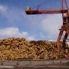 Одно из старейших предприятий лесной отрасли края отмечает 45-летие