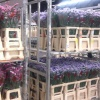 К Международному женскому дню в Красноярск доставят более 300 тонн цветов