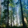 В Красноярском крае вырублено более 1600 кубометров древесины