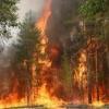 За сутки в крае потушили шесть лесных пожаров