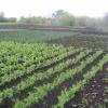 Красноярские дачники отстаивают земли под сады