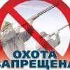 В Хакасии запрещена охота на отдельные виды  животных