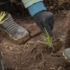 В Хакасии посадили 40 гектаров леса