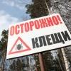 В Красноярские клиники обратилось 200 человек, пострадавших от клещей