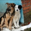 В Красноярске запланировано усыпить бездомных собак