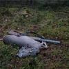 В Хакасии задержали браконьеров с убитой косулей