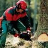 В Манском районе за незаконную рубку деревьев осужден лесозаготовитель