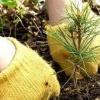 В Хакасии создано около 1500 гектаров рукотворных лесов