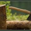 Задержан сотрудник полиции, незаконно вырубавший деревья