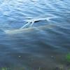 В Уярском районе утонул автомобиль с водителем и пассажиром