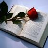 Что мы любим читать