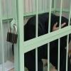 Виновный в смерти ребенка водитель из Абакана считает слишком суровым приговор суда