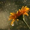 Синоптики обещают в выходные тепло и дожди