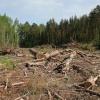 В Мотыгинском районе пресечена незаконная вырубка лесного массива