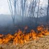 В Хакасии горел заповедник