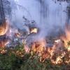 Информация о ситуации с лесными пожарами на территории  края
