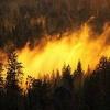 О ситуации с лесными пожарами на территории  края