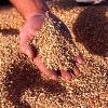 Бизнесмен из Ачинского района заплатит штраф за нарушение законодательства в сфере семеноводства