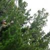 В Усть-Абаканском районе мужчина погиб при сборе кедровых шишек