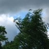 В Абакане дерево упало на автомобиль