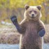 В лесах Красноярского края без вести пропали 13 человек