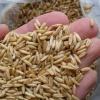 В Хакасии арестован опасный корм для животных