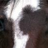 В Хакасии в ДТП погибли водитель и лошадь