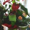 В школе поселка Каменка Ачинского района зацвел «Зимний сад»