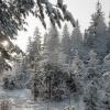 За красноярскими лесами усилится контроль