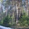 В Манском районе за незаконную рубку леса задержан бизнесмен