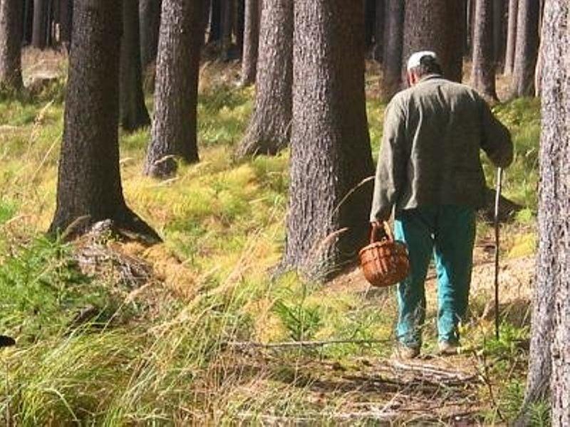 ВАбанском районе ищут мужчин, заблудившихся влесу