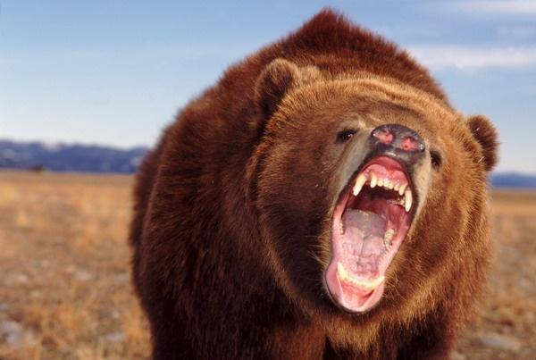 Насевере Красноярского края намужчину напал медведь