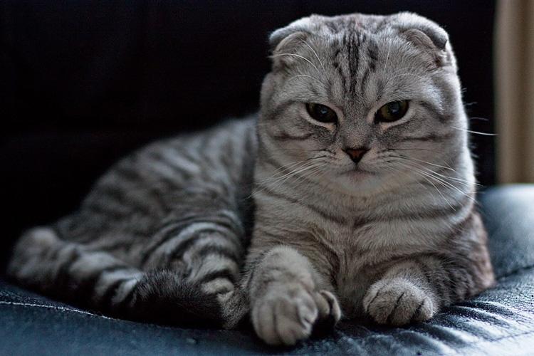 Жительница Ачинска отсудила 15 тыс. руб. запогибшую кошку