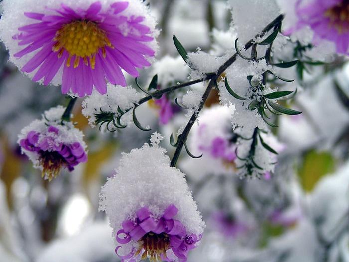 Ввыходные красноярцам обещают снег сдождем