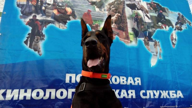 ВКрасноярске собачка отыскала вснегу практически замерзшего человека