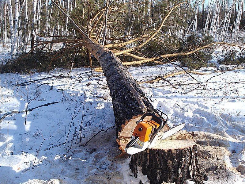ВКрасноярском крае мужчина вырубил лес на3 млн руб.