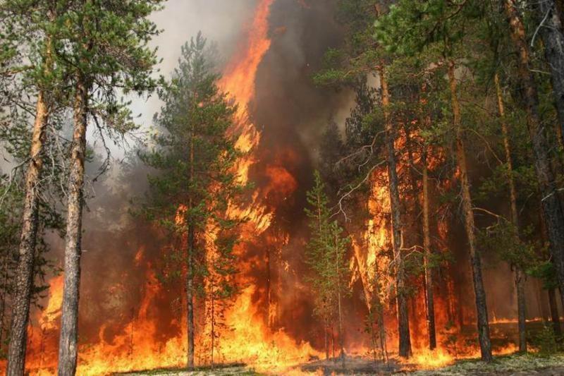 ВКрасноярском крае зафиксирован 1-ый в 2017г. лесной пожар