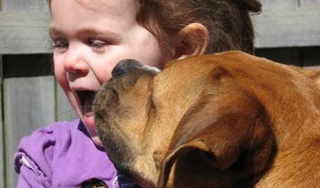Соседская собачка укусила девочку залицо вКрасноярском крае