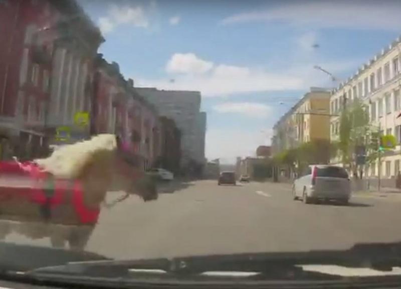 Пони бросилась под колеса иномарки вцентре Красноярска