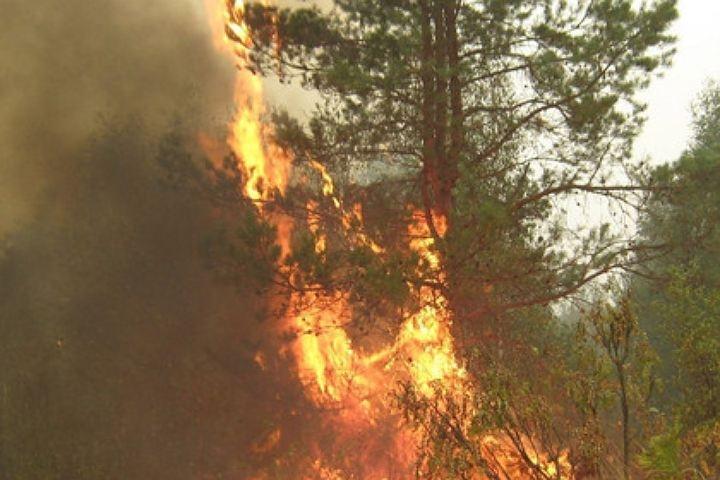 ВКрасноярском крае действует 24 пожара на практически тысяче гектар леса