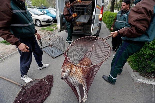 ВКрасноярске выделили 2,5 млн руб. наотлов бродячих животных