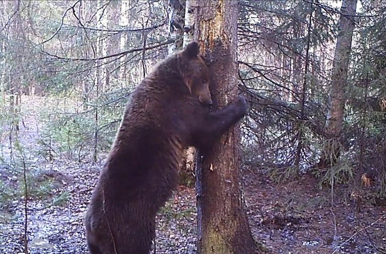 ВКрасноярске танцующий медведь попал вобъектив видеорегистратора