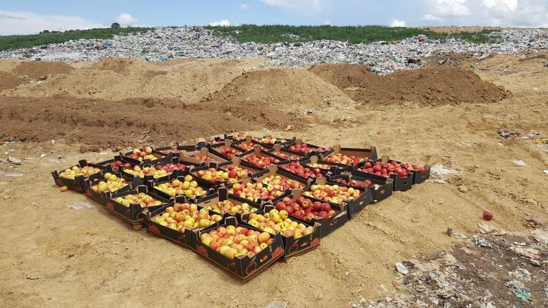 ВКрасноярске уничтожили 35 коробок польских яблок