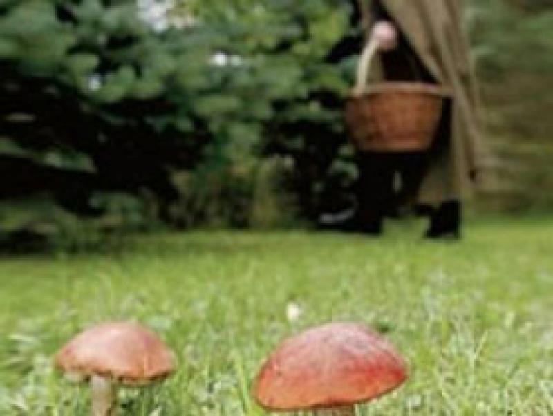 Пенсіонерка, яка зникла під час збору грибів у голопристанських лісах, знайшлася вдома у Чорнобаївці